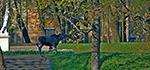 Лосенок в Гатчинском парке
